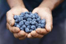 handful-of-blueberries